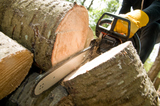 Profile Photos of A & B Tree Services