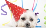 Profile Photos of Kids Birthday Party Guide