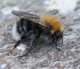 Profile Photos of Wasp Nest Removal Sutton