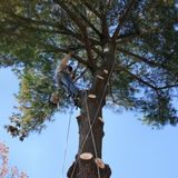 New Album of A-1 Tree Trimming & Removal