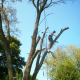 A-1 Tree Trimming & Removal