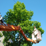 Profile Photos of Mike's Tree Service