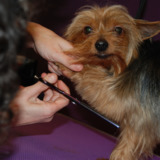 Muddy Little Paws - Professional Qualified Groomer