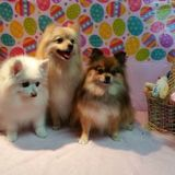 Profile Photos of Head To Tail Pet Grooming