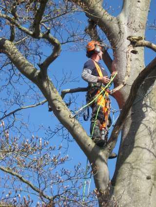 Blackdown Hills Tree and Countryside Services