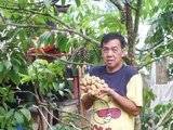 Santos Borbe Hi Value Fruits Nursery, Polangui, Albay