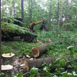 Land Clearing Crew