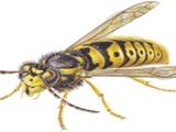 New Album of Countrywide Pest Control - Basingstoke