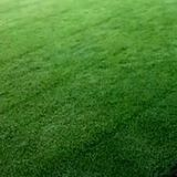 Profile Photos of CustomWise Turf & Tree