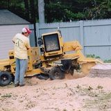 Profile Photos of Loyalty Tree Service