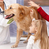 Profile Photos of East Bend Animal Hospital