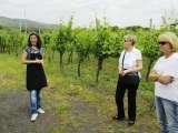Winery tour on Vesuvius during our Amalfi Coast Tour http://www.ipswichtours.com/amalfi_walking.html, Olde Ipswich Tours, Ipswich