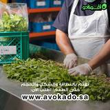 Packaging and Handling of Avokado