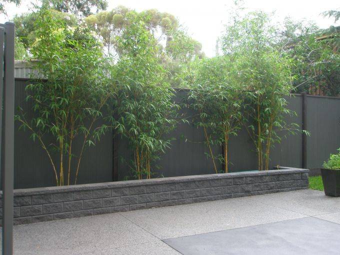 Profile Photos of Redcloud Bamboo 116 Old Dandenong Rd, Heatherton VIC 3202 - Photo 5 of 5