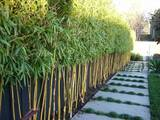 Profile Photos of Redcloud Bamboo