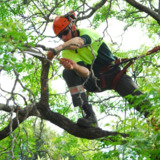 The Weatherhead Tree Service