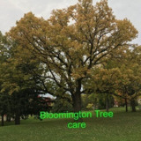 Bloomington Tree care
