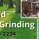 Beach Tree and Stump Grinding