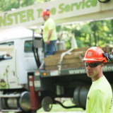 TREE PRUNING & REMOVAL SERVICES