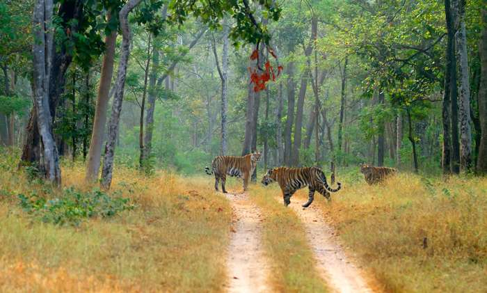 safari booking in pench national park Pench Jungle safari of Jungle Safari Booking In Pench National Park Village Awargani, Pench National Park, District - Seoni - 480881 - Photo 22 of 24