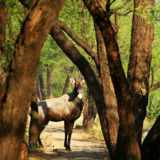 Jungle Safari Booking In Pench National Park