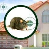 Pest Control Services in Goa - A to Z Pest Solutions