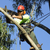 Tree & Stump Removal & Maintenance Experts In Adelaide