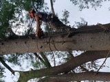 Profile Photos of York Woods Tree Service