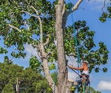 tree pruning charlotte Charlotte Tree Removals 12712 Wither Steele Ct