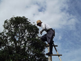 Profile Photos of Charlotte Tree Removals