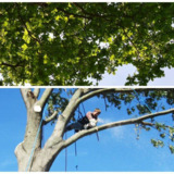 Godwin Tree Service, LLC