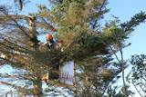 New Album of Tree Service Springfield MA