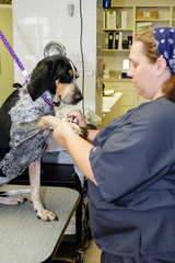 Profile Photos of Lombard Veterinary Hospital