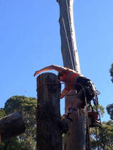 Profile Photos of Tree Lopping Brisbane