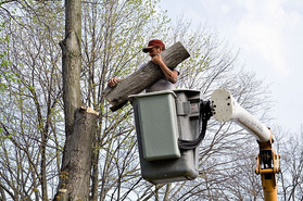 tree stump removal erie pa New Album of Erie Tree Trimmers 707 W 38th St Ste 267A - Photo 3 of 3
