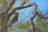 tree service erie , Erie Tree Trimmers, Erie