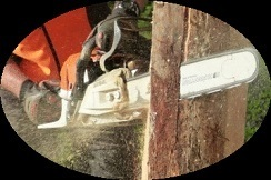 Profile Photos of Ajax Tree Service 180 Station St. Unit 5A - Photo 4 of 4