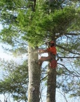 Profile Photos of Richmond Hill Tree Service
