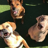 Pacific Pet Resort 2909 San Luis Rey Rd