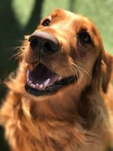 Profile Photos of Pacific Pet Resort