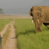 Safari In Jim Corbett National Park
