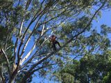 New Album of JC Tree Services Gold Coast
