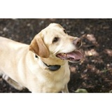 New Album of DogWatch by Laughing Labrador