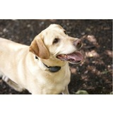 Profile Photos of DogWatch of Charlotte