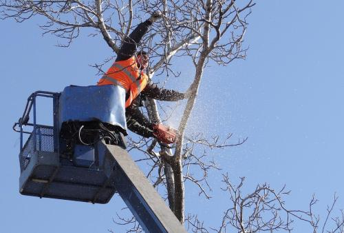Profile Photos of Fayetteville Tree Care Services 511 N. Reilly Rd #9 - Photo 3 of 4