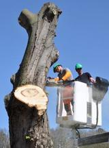 Profile Photos of Fayetteville Tree Care Services