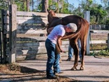 New Album of Piney Acres Training Stables