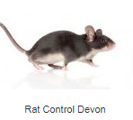 Shaw Pest Services, Exmouth