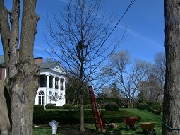 Profile Photos of Urban Arborist 23708 W. Milton Road - Photo 2 of 3