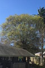 On Demand Tree Service of On Demand Tree Service